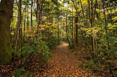 Aokigahara - Forest in Yamanashi Prefecture - Thousand Wonders