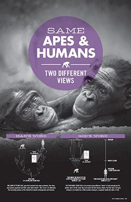 Same Apes and Humans, Two Different Views   Answers in Genesis