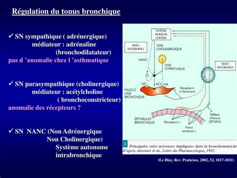 PPT - ASTHME BRONCHIQUE Illustrations PowerPoint