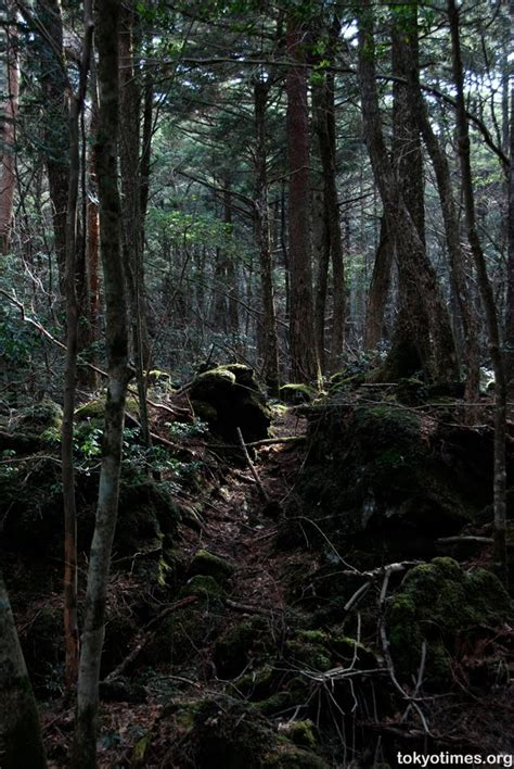 Aokigahara Forest-Popular place to commit suicide - Exotic